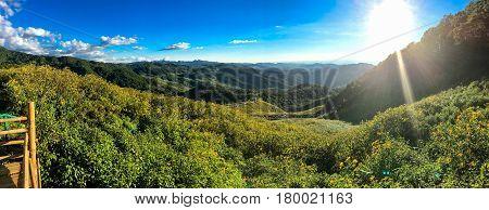 Mexican sunflower panorama and sunlight on Mae u Kho mountain Mae Hong Son Thailand.