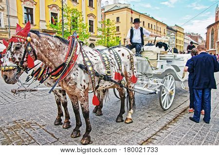 Horse Fiacre And People In Krakow Old Town