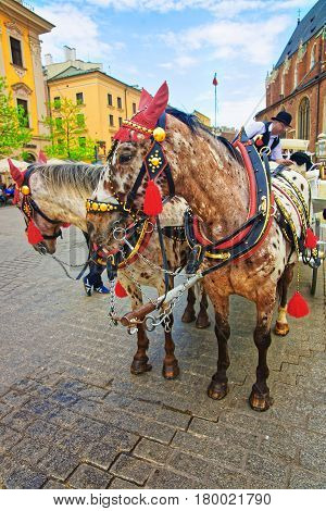 Horse Fiacre And People On Old Town Of Krakow