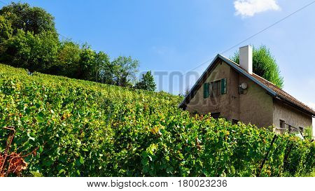 Chalet And Lavaux Vineyard Terraces Hiking Trail Swiss