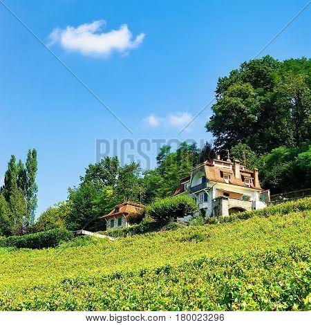 Chalet In Lavaux Vineyard Terraces Hiking Trail In Swiss