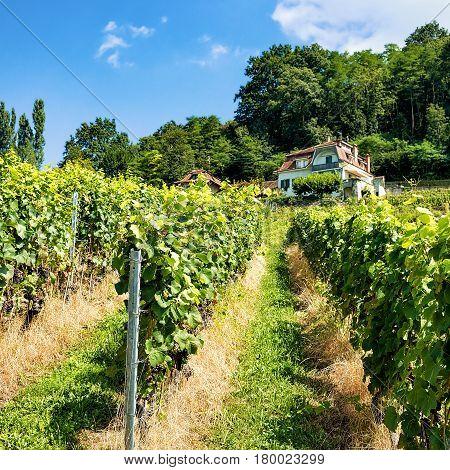 Chalet In Lavaux Vineyard Terraces Hiking Trail Of Swiss