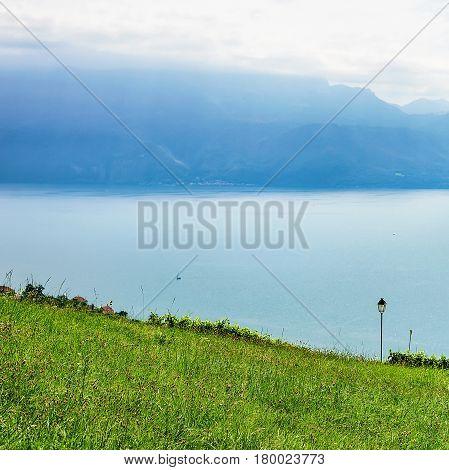 Nature at Lavaux Lavaux-Oron district of Switzerland
