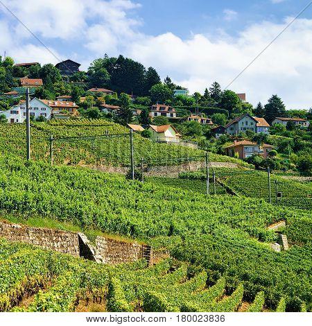 Railroad On Lavaux Vineyard Terraces In Switzerland