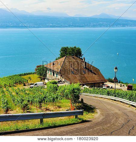 Road Leading To Lavaux Vineyard Terraces Hiking Trail Switzerland