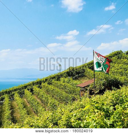 Shelter House With Flag On Vineyard Terraces Lavaux Of Switzerland