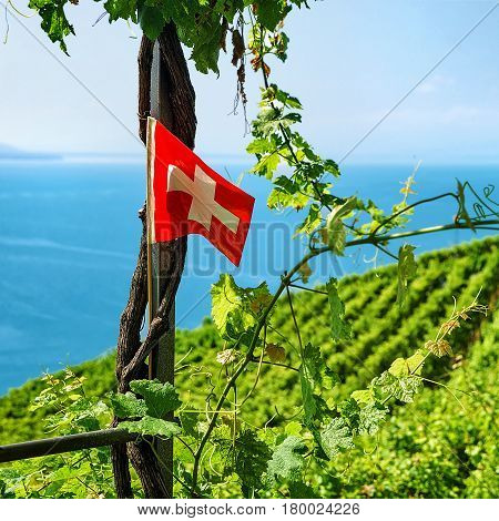 Swiss Flag At Vineyard Terraces Hiking Trail Lavaux In Switzerland