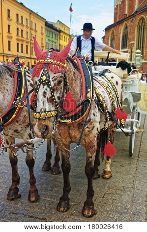 Horse Fiacre And People At Old Town Of Krakow