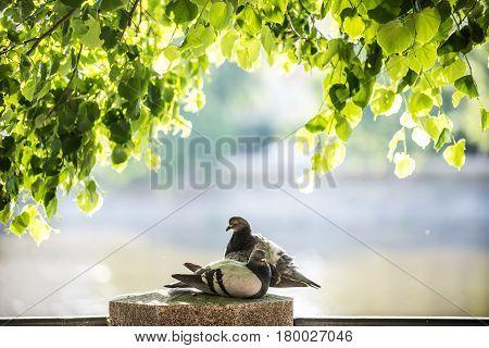 Lovey bird with love in the garden