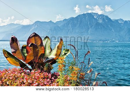 Flowers Blooming At Embankment Of Geneva Lake In Montreux