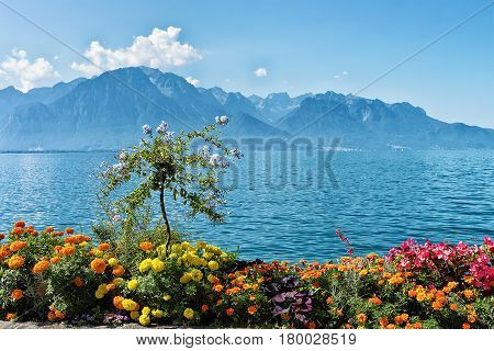 Flowers Blooming At Promenade Of Geneva Lake In Montreux