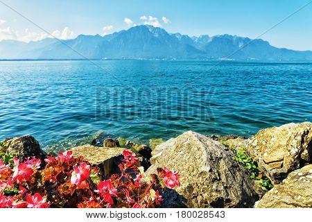 Flowers Blooming On Promenade Of Geneva Lake In Montreux