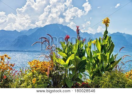 Flowers Blossoming At Embankment Of Geneva Lake In Montreux