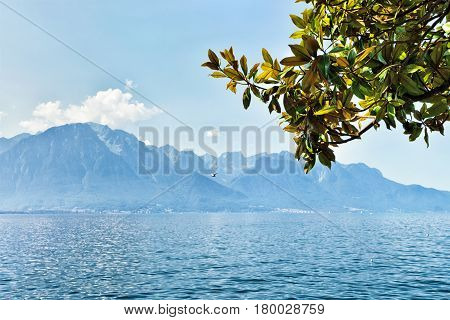 Green Leaves Blooming In Promenade Of Geneva Lake In Montreux