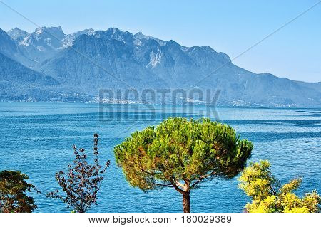 Trees Blooming At Embankment Of Geneva Lake In Montreux