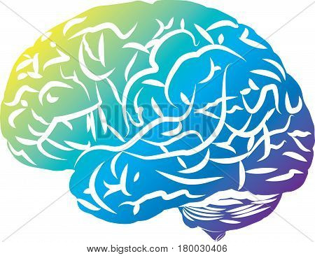 Colored brain, side view, simplified. Imaginative and creative.