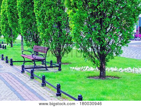 Bench in the park at Marcinkovsky Alley Poznan Poland