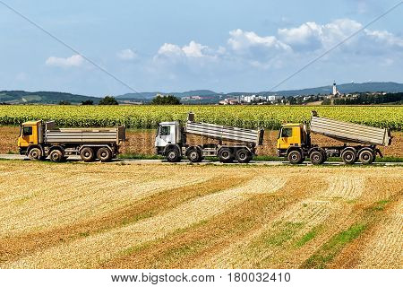 Trucks After Doing Agricultural Seasonal Work In Field