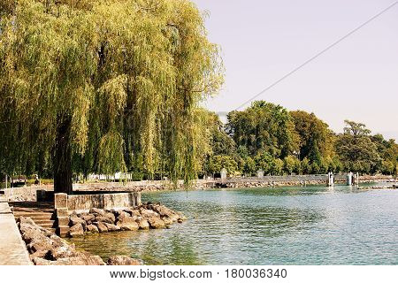 Willow Tree At Lake Geneva Embankment In Ouchy Village Lausanne