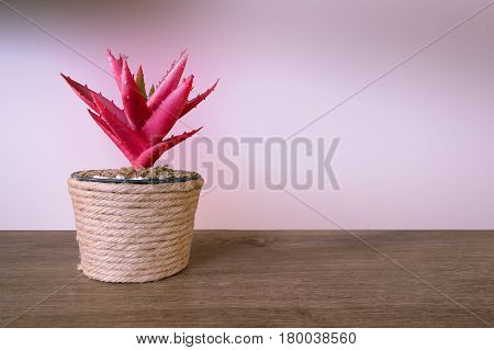 Small Tree In Pot Decoration And Abstract Background