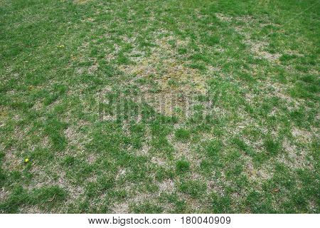 bad condition lawn need maintain service in spring