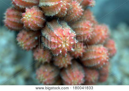 orange cactus macro up close beautiful lovely