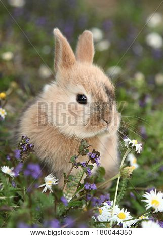 Cute bunny rabbit in colorful meadow