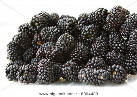 A lot of a ripe juicy blackberry. poster