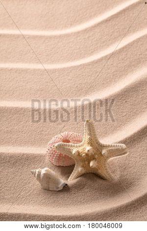 sea shell starfish and  urchin on rippled beach sand.