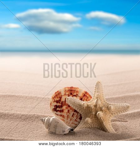 Sea shells and starfish on the beach of a tropical paradise island. Star fish summer vacation or holiday background with copy space.