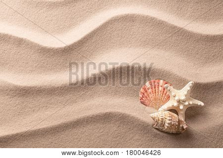 A tropical starfish and sea shells laying in the beach sand. Sandy texture with star fish and copy space. Concept  for summer vacation or exotic holiday.