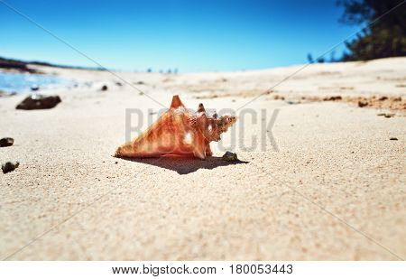 Cockleshell On Sand The Yellow Small Beach Paradise Rest