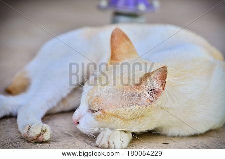 sweet sleep white cat laying down on floor