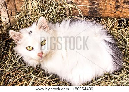 white cat lying in basket with hay