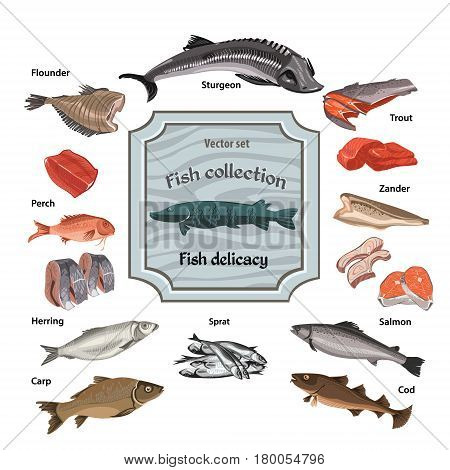 Hand drawn colored seafood collection with whole and parts fishes of different kinds isolated vector illustration