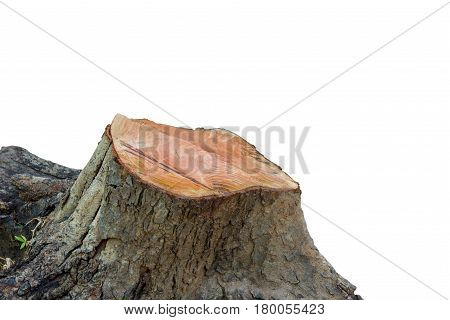 Tree stump isolated on white background. This has clipping path.