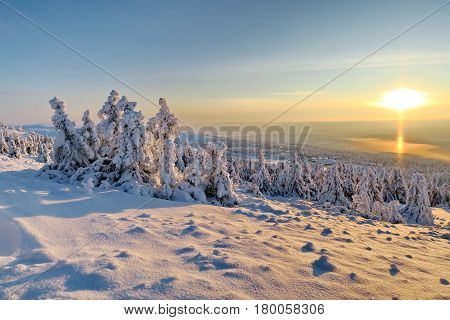 Fir-tree and pines heavily covered with fresh snow on background blue sky and mountains. Sunset. Subpolar Urals, Russia