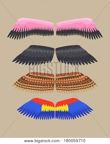Wings isolated animal feather pinion bird freedom flight and natural hawk life peace design flying element eagle winged side shapevector illustration. Beauty haven soft anatomy graphic.
