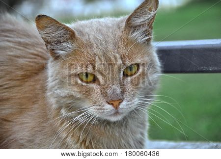 cat in bulgarian town primorsko, macro shot