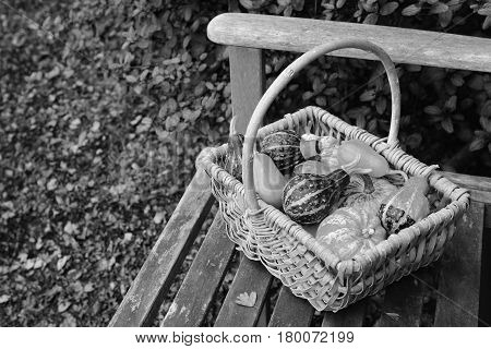 Variety of boldly patterned ornamental gourds in a rustic basket left on a garden bench in fall