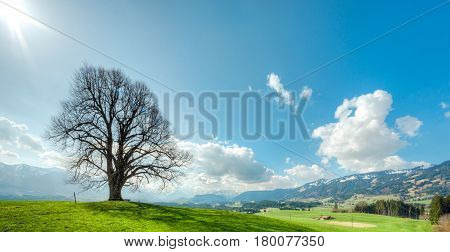 Solitary big bald tree standing alone on a hill in springtime. Blue sky with sun beams, clouds and snow covered mountains in a rural countryside with farmhouses.