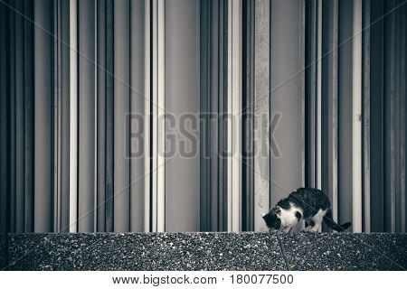 PARIS, FRANCE - MAY 13: Cat and sculpture in la Defense business district on May 13, 2015 in Paris. With the population of 2M, Paris is the capital and most-populous city of France.
