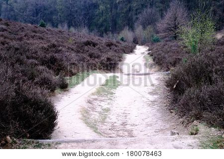 Heath And Path At The Posbank In Rheden, National Park Veluwe, Netherlands