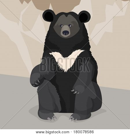 Formosan or American black bear with white collar close-up sitting near wall on gray background. Vector illustration of wild animal white-throated bear in cartoon style