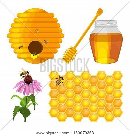 Beehive nest, bee on honeycomb, bees on purple field flower, jug with fresh honey and wooden stick isolated on white background. Set of beekeeping elements vector illustration in realistic design