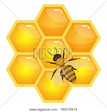 Bee on honeycombs isolated on white background. Realistic striped insect with wings on hexagonal prismatic wax cells full of fresh healthy organic honey vector illustration