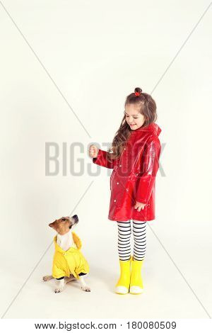 Little girl in red raincoat and rubber boots is training her dog Jack-Rassel terrier which is wearing yellow raincoat. They look like they are dressed similar cause of their coats. Kid is holding in hand something invisible.
