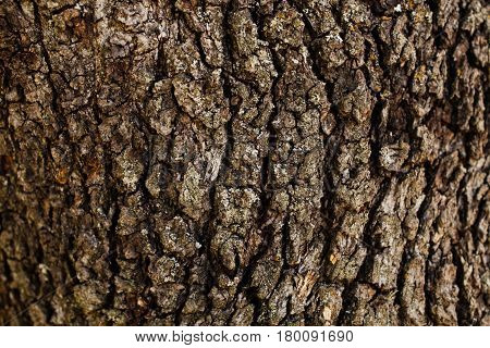 Oak tree bark texture. Oak tree background. Abstract texture and background for designers. Natural pattern. Organic Abstract texture. Macro view of oak bark texture.