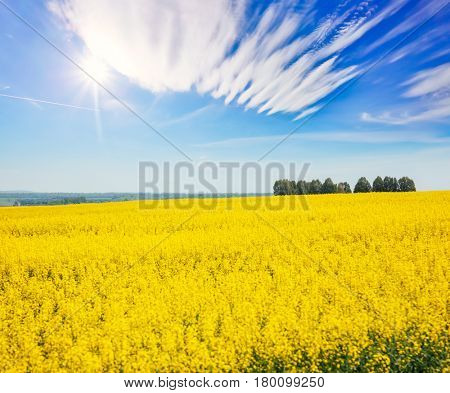 Great canola field in sunlight. Gorgeous day and picturesque scene. Location rural place of Ukraine, Europe. Wonderful image of wallpaper. Ecology concept, global warming. Explore the world's beauty.