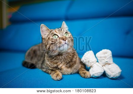 Cat, Striped, Blue Sofa, Baby Booties